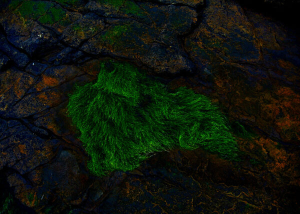 grün-orange I