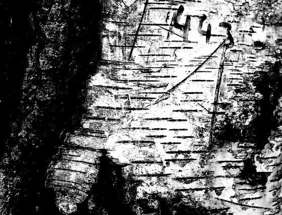 schwarz-weiß VI